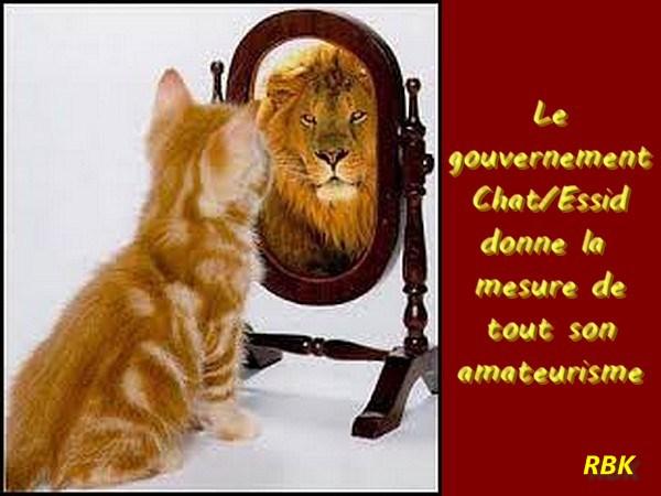 Mus e du bardo j accuse for Miroir des chats